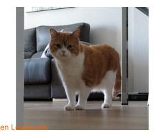 Gato macho en adopción - Imagen 7