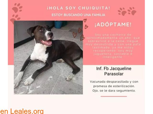 Perrita en adopción - México - 1
