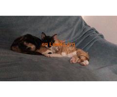 Adopción Conjunta  - Imagen 5