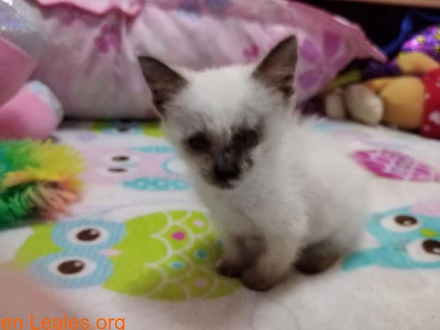 La gata mutilada en Telde salva su vida