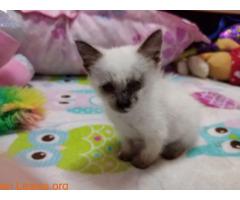 La gata mutilada en Telde salva su vida - Imagen 1