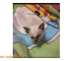 La gata mutilada en Telde salva su vida - Imagen 2