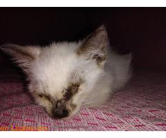 La gata mutilada en Telde salva su vida - Imagen 3