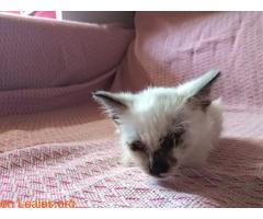La gata mutilada en Telde salva su vida - Imagen 4