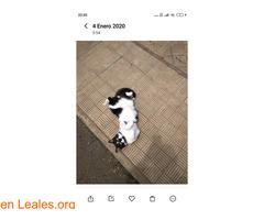 Gato perdido - Imagen 4