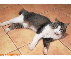Gato perdido! SE BUSCA! - Imagen 2