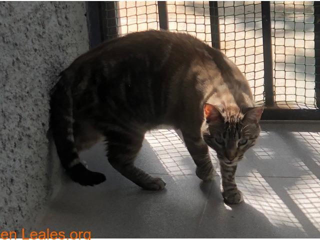 Hogar de adopción para gato macho cariño