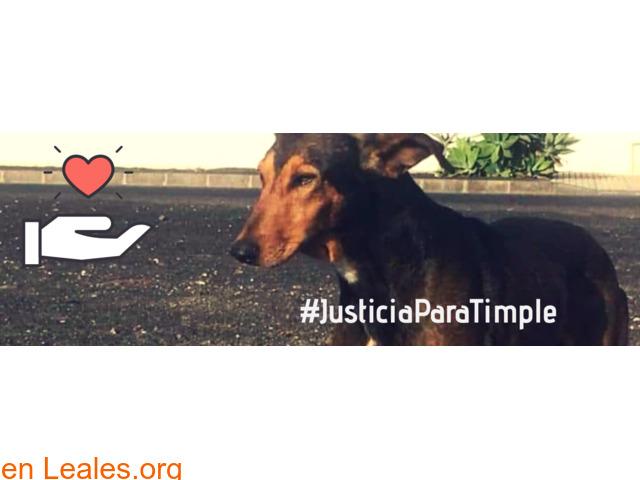 Justicia Para Timple