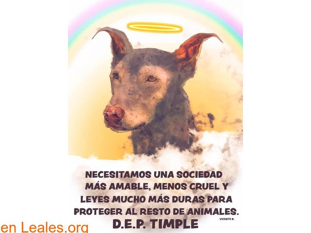 Por una sociedad amable con los animales - 1