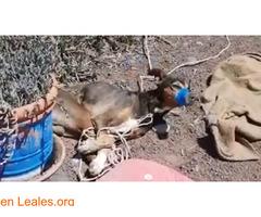 Por una sociedad amable con los animales - Imagen 2