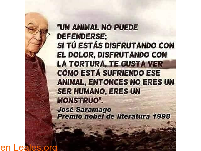 Por una sociedad amable con los animales - 3