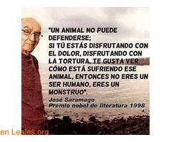 Por una sociedad amable con los animales - Imagen 3