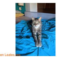 TOR gato perdido - Imagen 1
