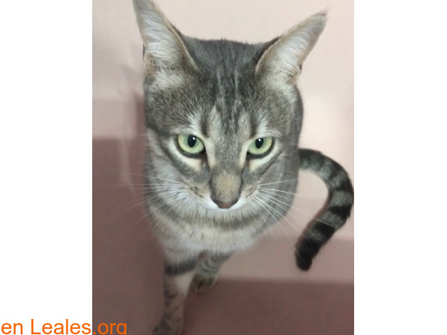 TOR gato perdido - 2