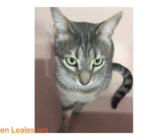 TOR gato perdido - Imagen 2