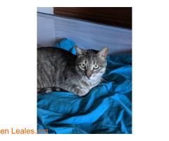 TOR gato perdido - Imagen 3