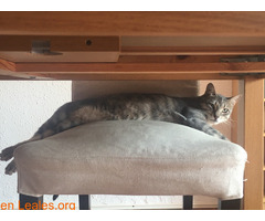 TOR gato perdido - Imagen 4