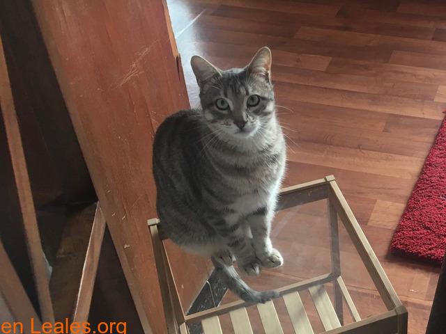 TOR gato perdido - 5