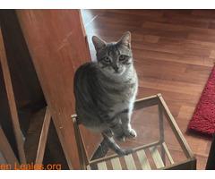 TOR gato perdido - Imagen 5