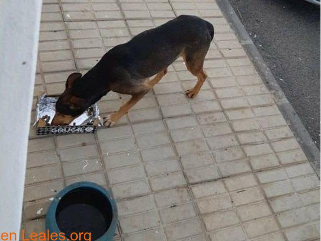 Por una sociedad amable con los animales - 6