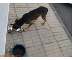 Por una sociedad amable con los animales - Imagen 6