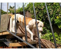Pirlo busca un nuevo hogar - Imagen 4