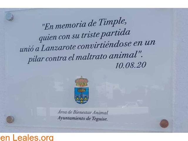 Placa conmemorativa para Timple