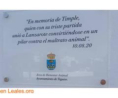 Placa conmemorativa para Timple - Imagen 1