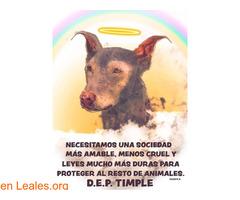 Placa conmemorativa para Timple - Imagen 5