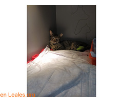 Varios gatos muriendo - Imagen 3