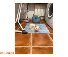 Gato blanco encontrado en Toledo - Imagen 2