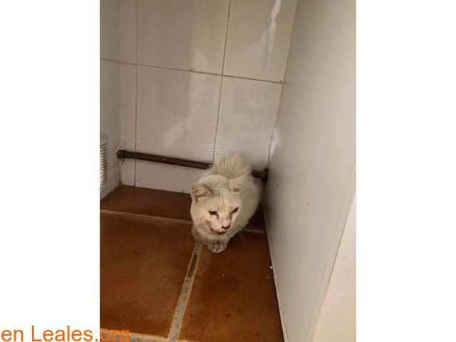 Gato blanco encontrado en Toledo - 3