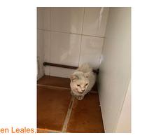 Gato blanco encontrado en Toledo - Imagen 3