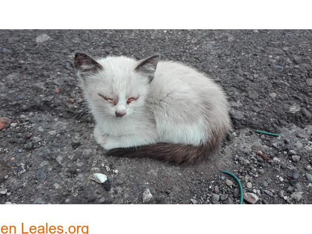 Gofio,el gato que dio una lección - 2