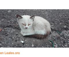 Gofio,el gato que dio una lección - Imagen 2