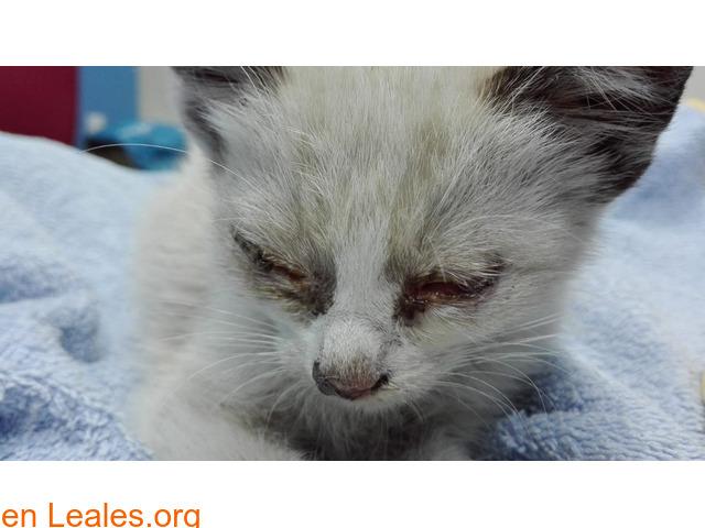 Gofio,el gato que dio una lección - 3