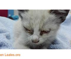 Gofio,el gato que dio una lección - Imagen 3