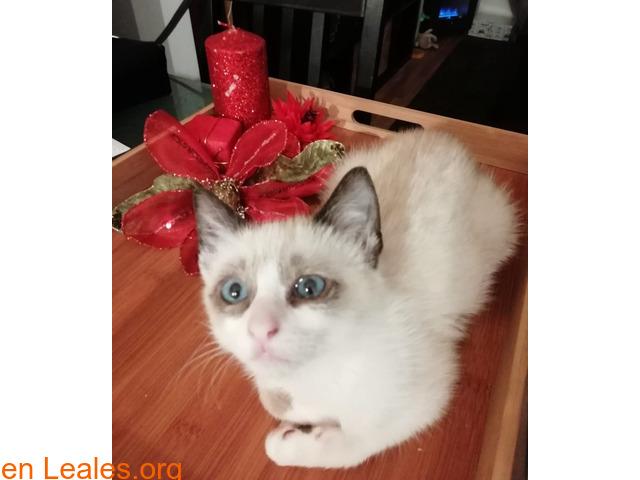 Gofio,el gato que dio una lección - 9