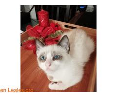 Gofio,el gato que dio una lección - Imagen 9