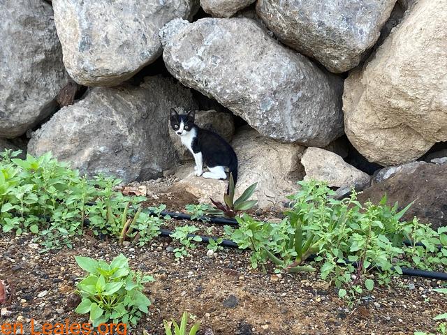 Gatitos Adopción o acogida urgente! - 2