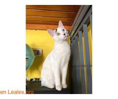 Gato perdido en Candelaria - Imagen 1