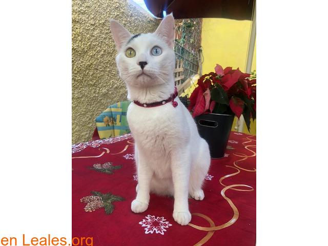 Gato perdido en Candelaria - 2