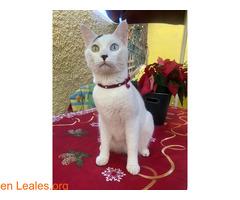 Gato perdido en Candelaria - Imagen 2