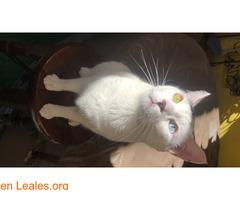 Gato perdido en Candelaria - Imagen 3