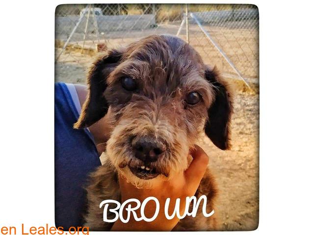BROWN - 1