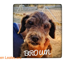 BROWN - Imagen 1