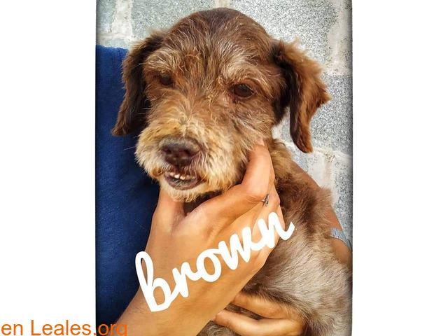 BROWN - 3