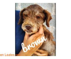 BROWN - Imagen 3