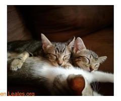 Lila y Mika - Imagen 2