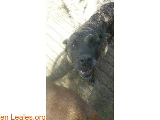 Perdidas dos perras en San Mateo - 1